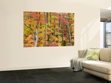 Autumn Leaves, White Mountains Laminated Oversized Art