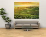 Vineyard, Hunter Valley, Australia Giant Art Print
