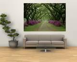A Beautiful Pathway Lined with Trees and Purple Azaleas,