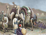 Silk Road, Caravan of Camels Resting, Antioch