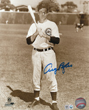 Andy Pafko Chicago Cubs Autographed Photo (Hand Signed Collectable)