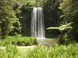 Millaa Millaa Falls, Atherton Tablelands, Queensland, Australia, Pacific