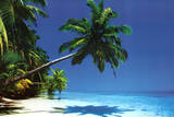 Maldives (Palm Tree Over Beach) Art Poster Print Poster