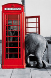 Its for You (Elephant in Phone Booth) Art Poster Print