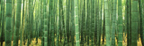 Buy Japan (Bamboo Forest) at AllPosters.com