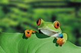 Red Eyed Tree Frog (Peeking Over Leaf) Art Poster Print Poster