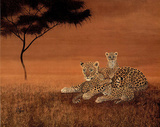 Leopards on the Plain (Wildlife) Art Print Poster