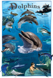 Laminated Dolphins Animal Educational Chart Poster Print