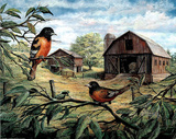 Orioles Birds on Tree Branch & Barns Art Print POSTER