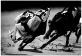 Dog Racing at Derby Lane 1989 Archival Photo Poster
