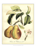 Printed Tuscan Fruits IV Giclee Print