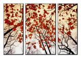 Branches nues et feuilles d'érable rouge poussant le long de la route