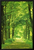 Forest Path Lamina Framed Poster
