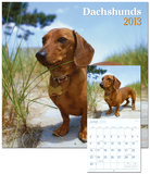 Dachshunds - 2013 Wall Calendar