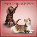 Yoga Kittens and Puppies - 2013 Mini Wall Calendar