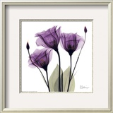 Royal Purple Gentian Trio Framed Art Print