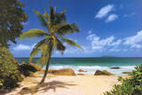 Palm Beach (Tropical Landscape Photo) Art Poster Print Poster