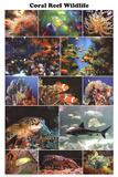 Laminated Coral Reef Marine Wildlife Educational Chart Poster