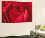 The Rose Flower Mini Mural Huge Poster Art Print