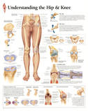 Buy Understanding the Hip and Knee Anatomy Print Poster at AllPosters.com