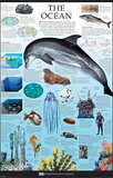 The Ocean Dorling Kindersley Educational Poster Print