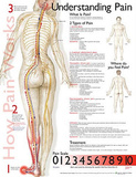 Buy Understanding Pain Anatomical Chart Poster Print at AllPosters.com