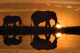 Jim Zuckerman African Silhouette Elephants Art Print Poster
