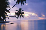 Buy Tropical Sunset (Palm Trees Over Water, Huge) Art Poster Print at AllPosters.com