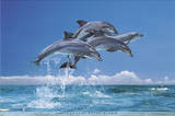 Steve Bloom (Four Dolphins) Art Poster Print