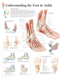 Buy Understanding the Foot and Ankle Educational Chart Poster at AllPosters.com