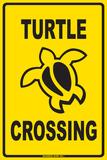 Passage d'une tortue
