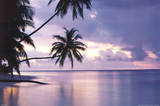 Buy Tropical Sunset at AllPosters.com