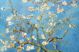 Almond Branches in Bloom, San Remy, c. 1890