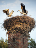 Storks on Top of Chimney in Town of Lenzen, Brandenburg, Germany, Europe