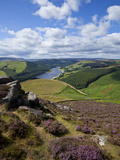 Derwent Edge, Ladybower Reservoir, and Purple Heather Moorland in Foreground, Peak District Nationa