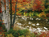 Buy Swift River with Aspen and Maple Trees in the White Mountains, New Hampshire, USA at AllPosters.com
