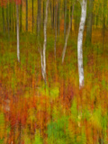 Abstract of Autumn Forest Scene, New York, Usa