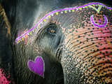 Buy Elephant's Eye. Sonepur Mela, India at AllPosters.com