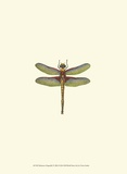 Miniature Dragonfly IV Art Print