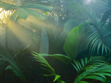 Buy Rainforest Vegetation in Morning Light at AllPosters.com