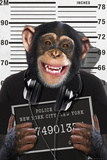 Chimp-Mugshot