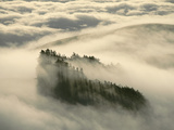 Buy Redwoods in Fog, Monterey Bay, California at AllPosters.com