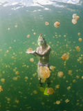 Buy Skin Diving Jellyfish (Mastigias Papua Etpisonii), Jellyfish Lake, Micronesia, Palau at AllPosters.com