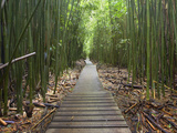 Boardwalk Trail Through a Bamboo Forest on Maui, Hawaii, USA