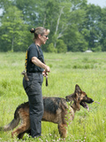 K9 Police Officer Training a German Shepherd as a Cadaver or Corpse Dog