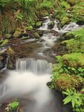 Buy Rushing Water and New Spring Growth in the Hoh Rainforest, Olympic National Park, Washington, USA at AllPosters.com