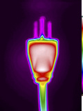 Thermogram of an Electrical Power Plug, Nema 5, Three Wire Grounding Device