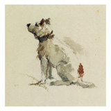 A Terrier, Sitting Facing Left (W/C on Paper)