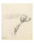 Study of a Hound, 1794 (Pencil on Paper)