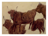 Studies of Highland Cattle (Oil on Paper)